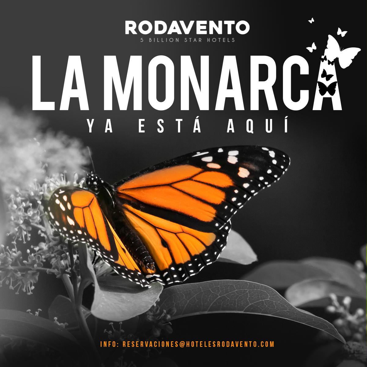 Mariposa Monarca en Valle de Bravo