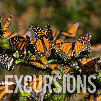 Excursión al Santuario de la Mariposa Monarca organizado por Cinco Rodavento