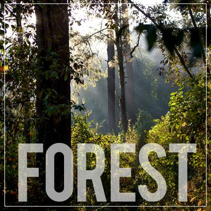 Actividades en el bosque de Valle de Bravo, organizadas por Cinco Rodavento