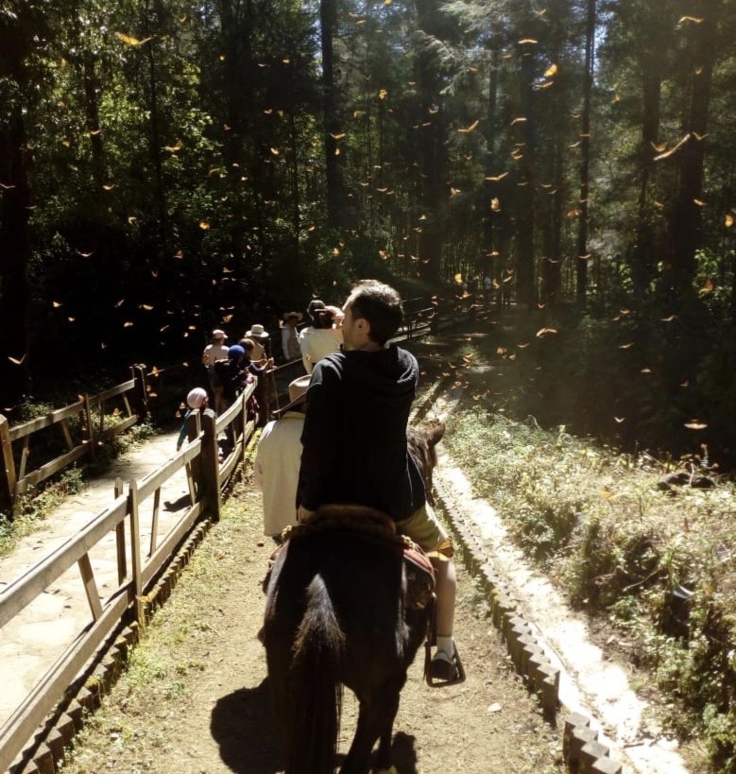 Visita al santuario de la mariposa monarca en valle de bravo