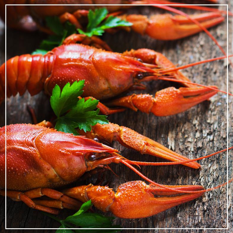 Dónde comer en Jalcomulco, Experiencia gastronómica en Jalcomulco