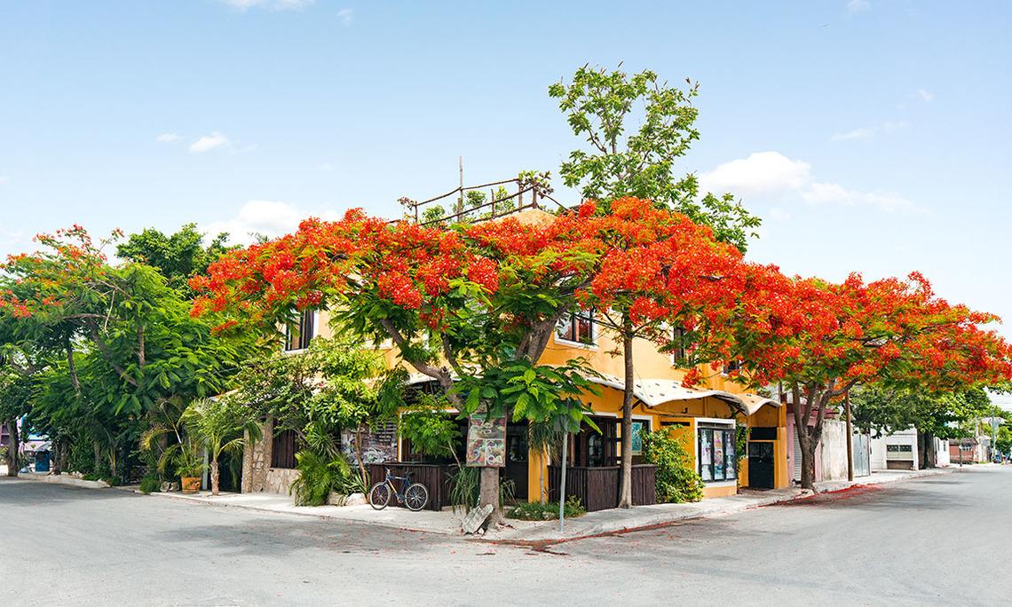 Maison Tulum Hotel