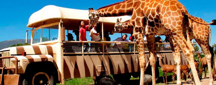 Reino Animal Park